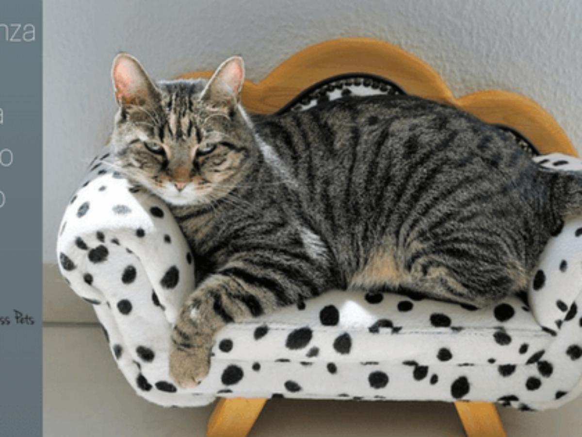 sintomi di morte del gatto