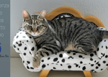 Insufficienza renale nel gatto anziano