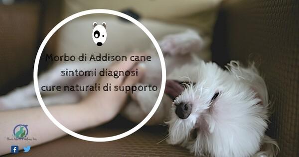 Morbo di Addison cane, Morbo di Addison cane terapia sintomi diagnosi e cure naturali