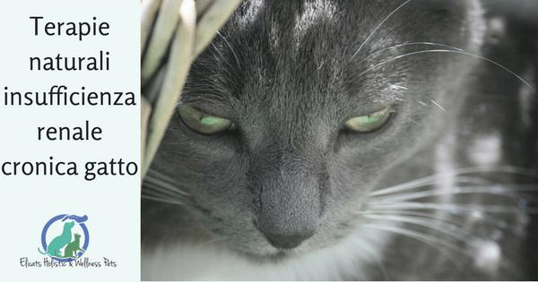 Terapie naturali insufficienza renale cronica gatto