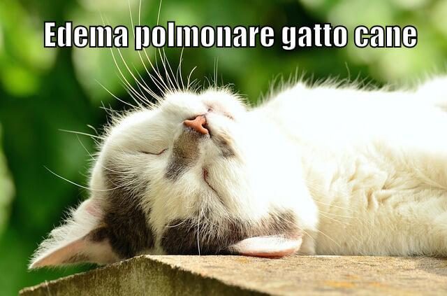 Edema polmonare gatto cane