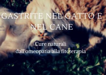Gastrite nel gatto e nel cane cure naturali