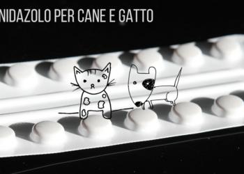 Metronidazolo per cane e gatto