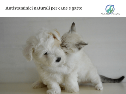 Antistaminici naturali per cane e gatto