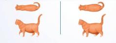 come sapere se il gatto è obeso