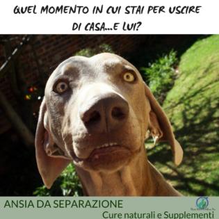 Ansia da separazione nel cane, Ansia da separazione nel cane cure naturali e supplementi
