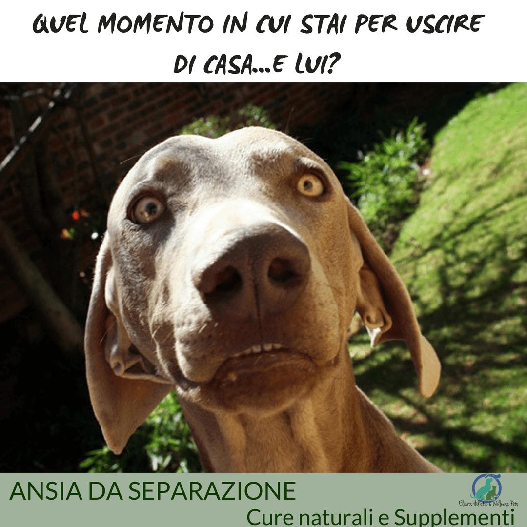 Come curare l'ansia del cane
