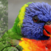 Cardo mariano per uccelli