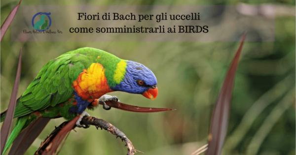 Fiori di Bach per gli uccelli, Fiori di Bach per gli uccelli come somministrarli ai BIRDS