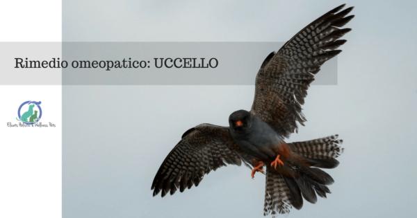 rimedio omeopatico uccello, Rimedio omeopatico: UCCELLO