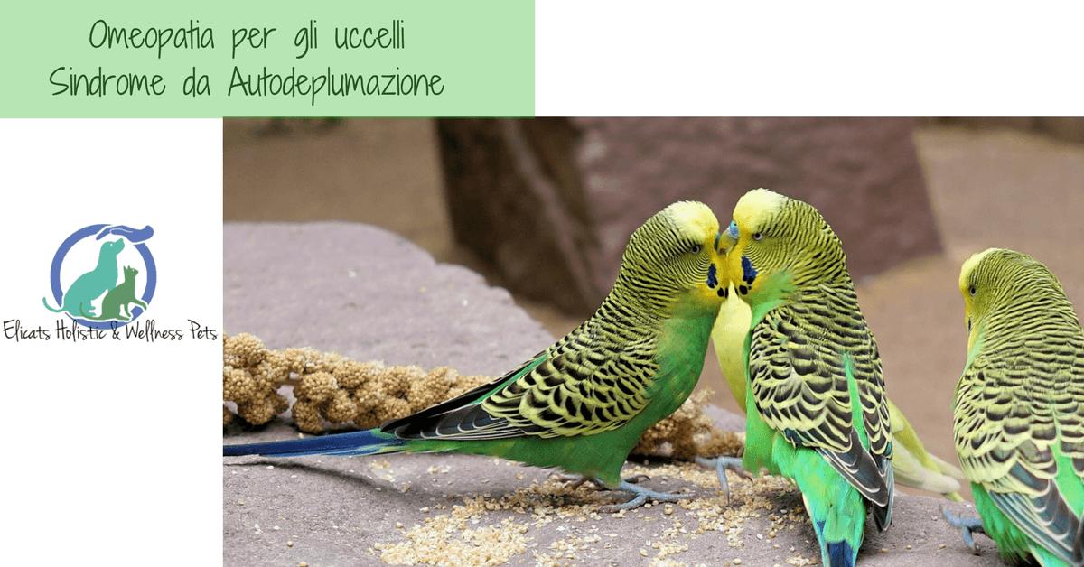 omeopatia per gli uccelli