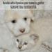 Acido alfa lipoico per cane