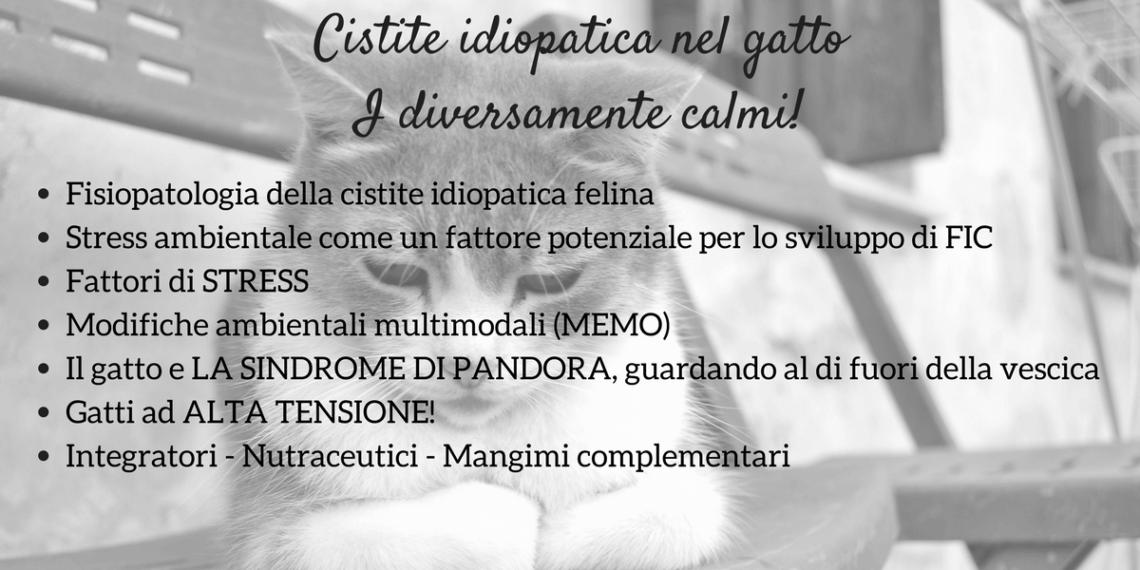 Cistite idiopatica gatto
