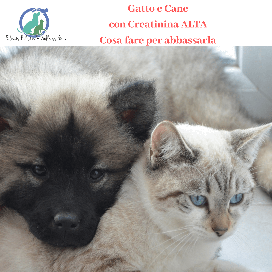Gatto con creatinina alta