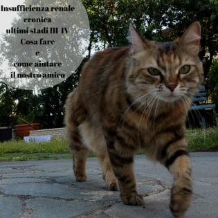 insufficienza renale gatto stadio terminale