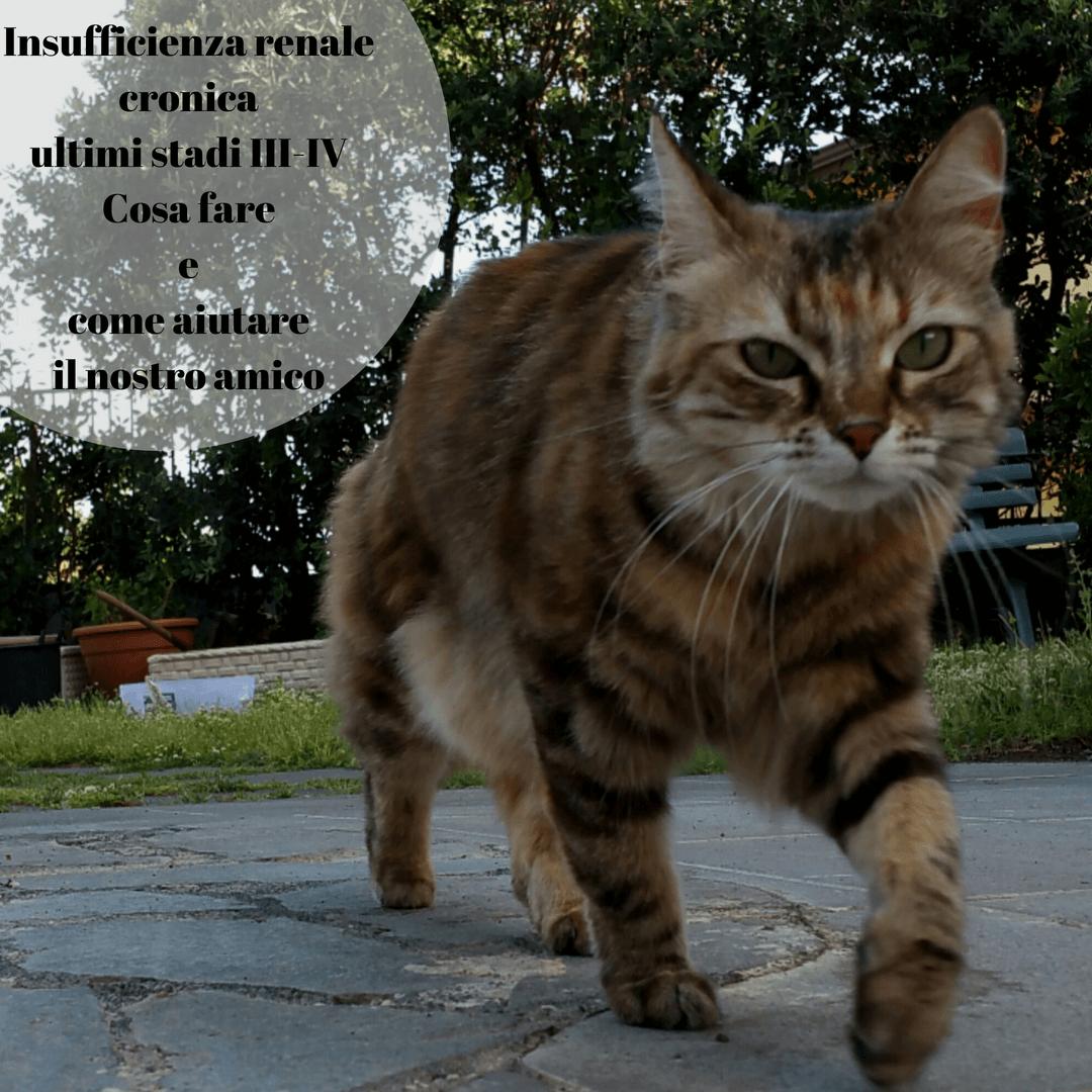 Insufficienza Renale Cronica Terminale Gatto Cosa Fare E Come Aiutarlo