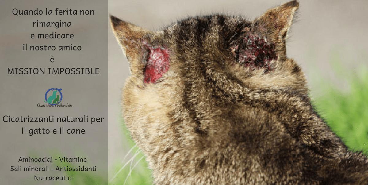 cicatrizzanti ferita cane gatto