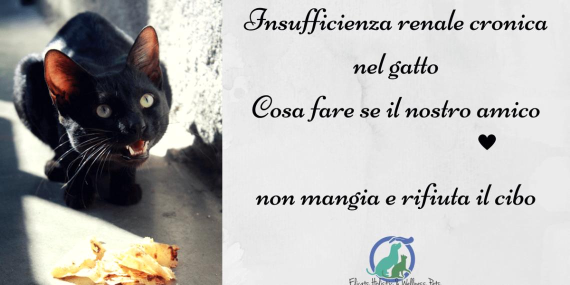 Insufficienza renale cronica gatto non mangia