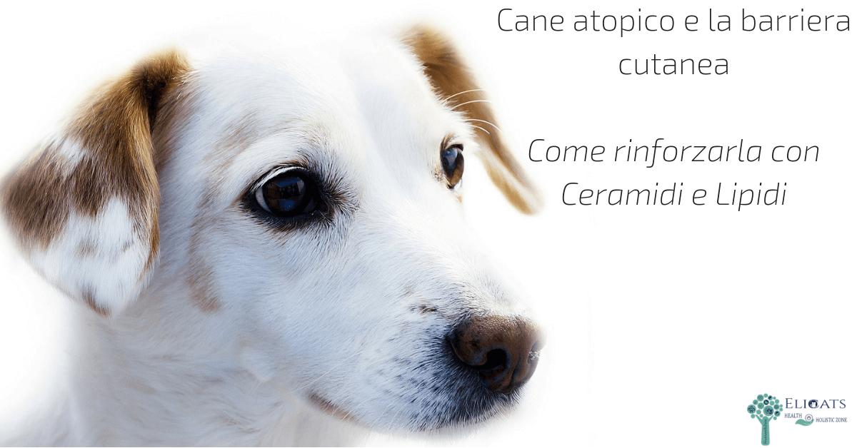 crema per dermatite atopica cane