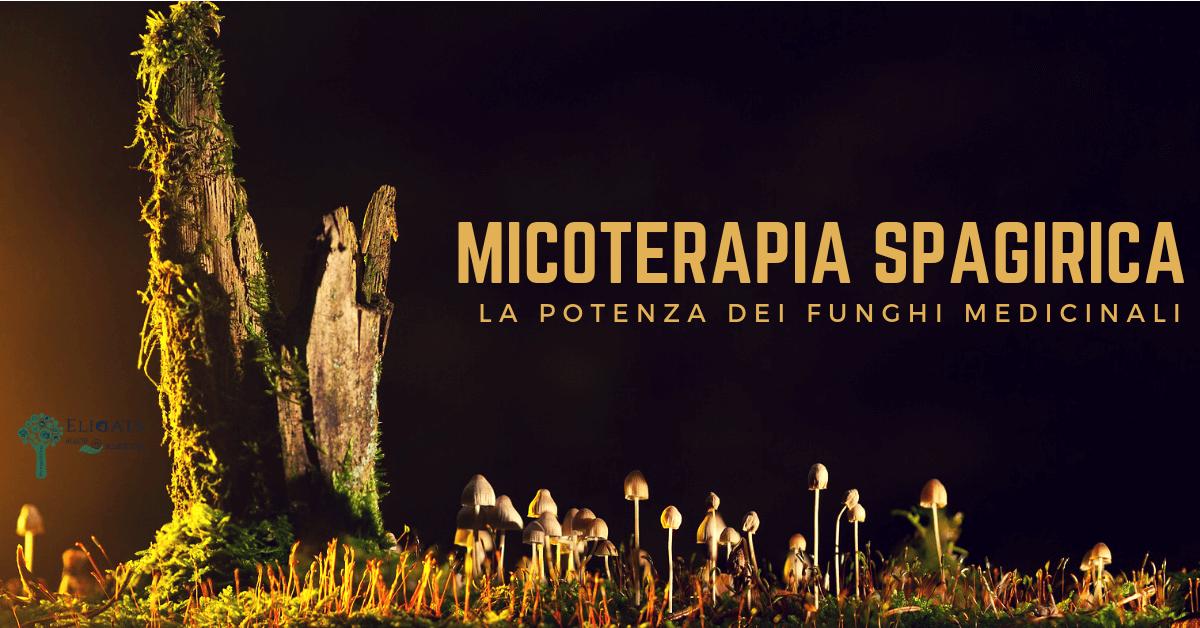 Micoterapia spagirica la potenza dei funghi medicinali