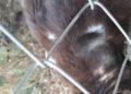 eczema gatto