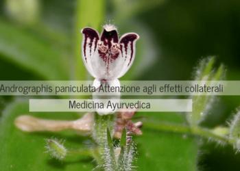 ndrographis paniculata effetti collaterali