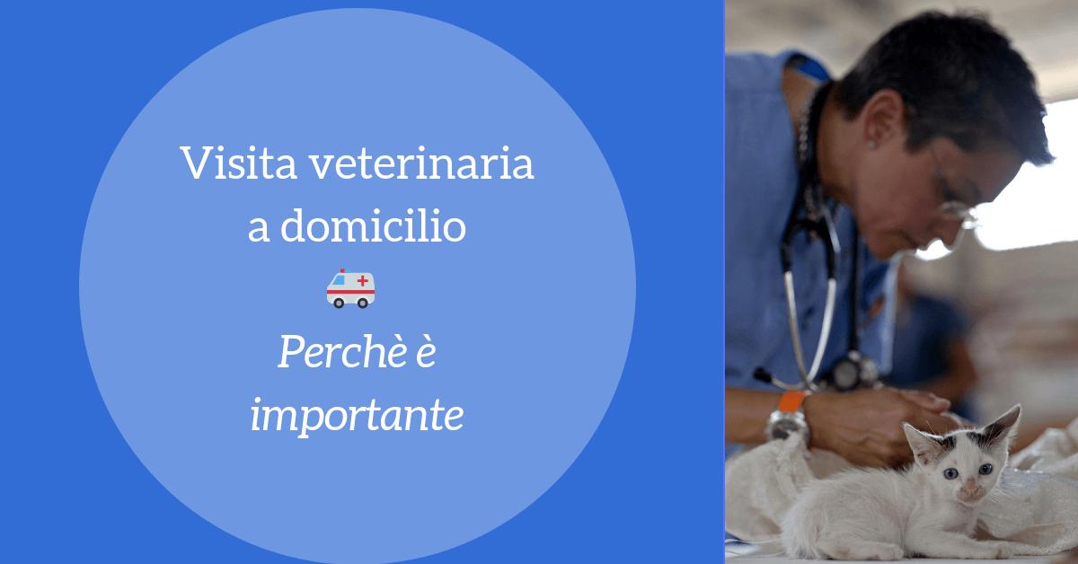 Visita veterinaria a domicilio