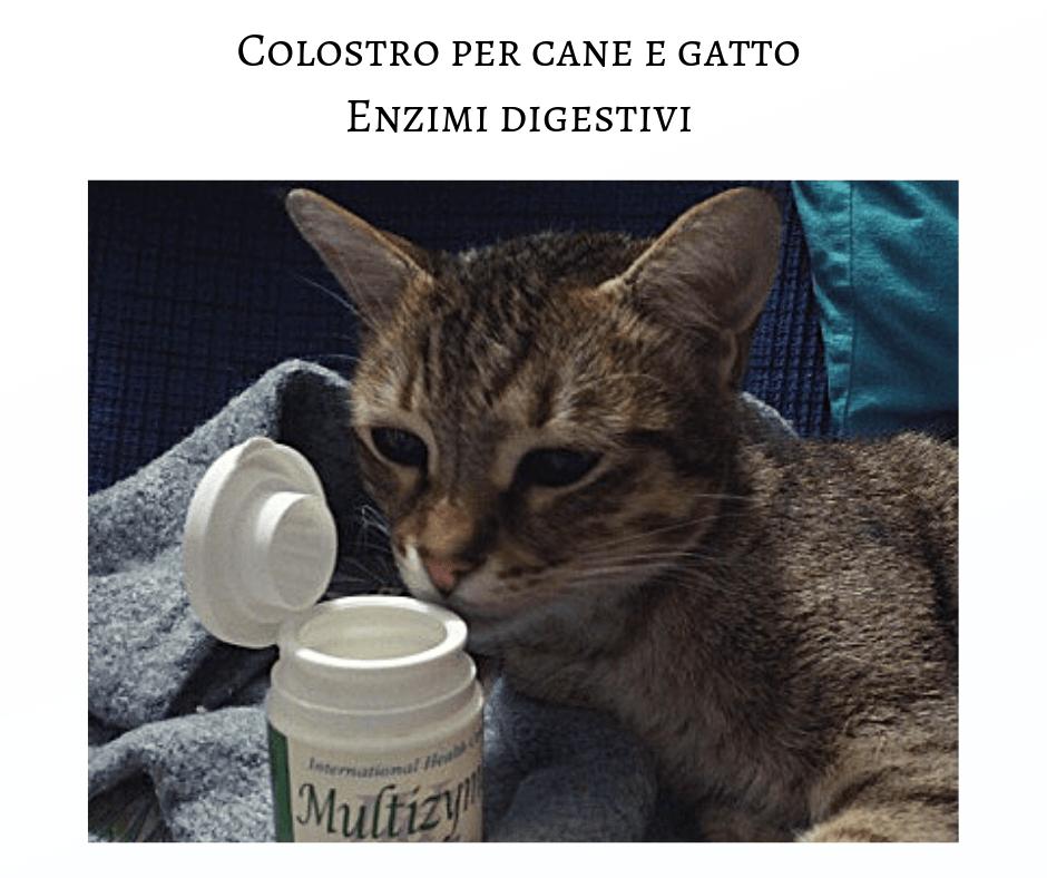 Colostro Per Cane E Gatto Enzimi Digestivi Fivfelvibd Elicatsit