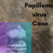 Papilloma virus Cane