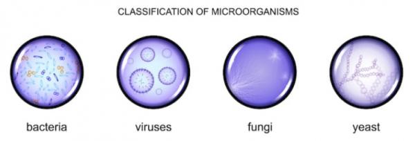 microrganismi effettivi per cane