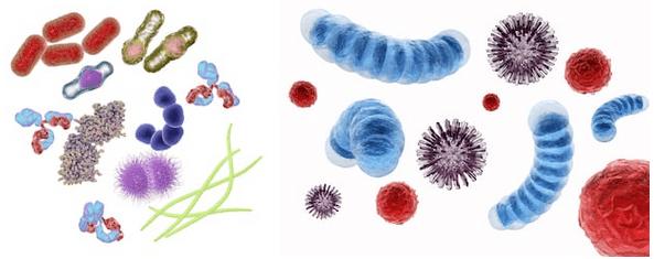 microrganismi effettivi cane gatto