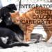 Integratori cistite calcoli cane gatto