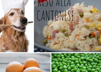 Riso cantonese cane