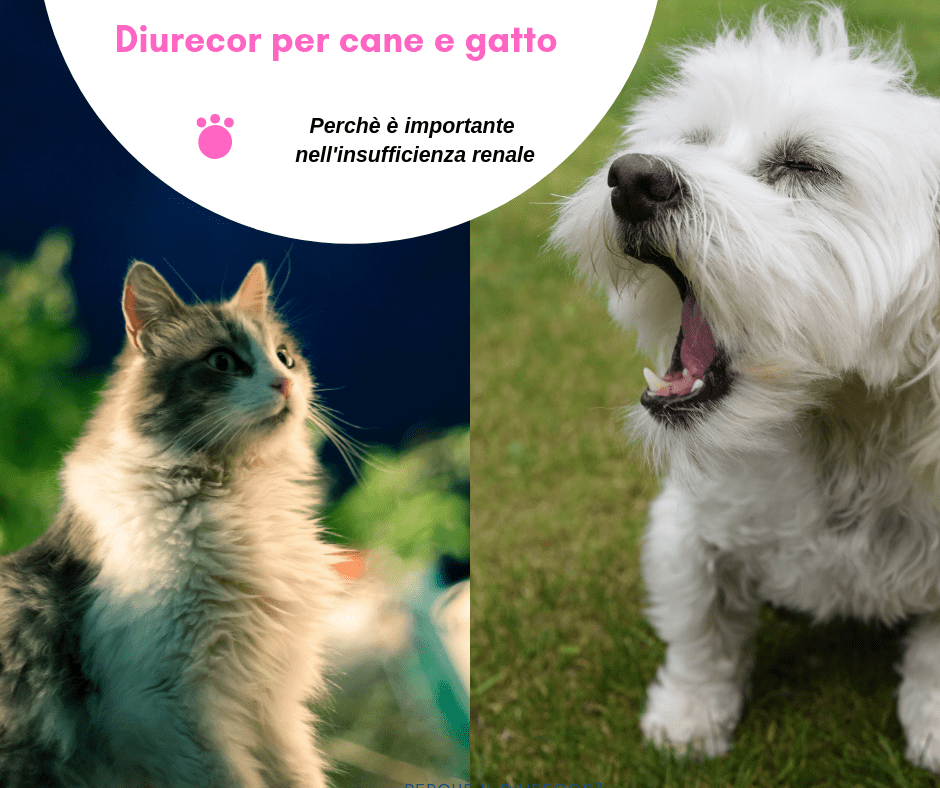 Diurecor gatto cane