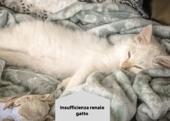 quale probiotico ckd gatto