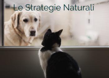 ibd e insufficienza renale gatto cane