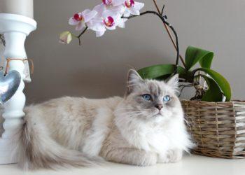 desmodio gatto