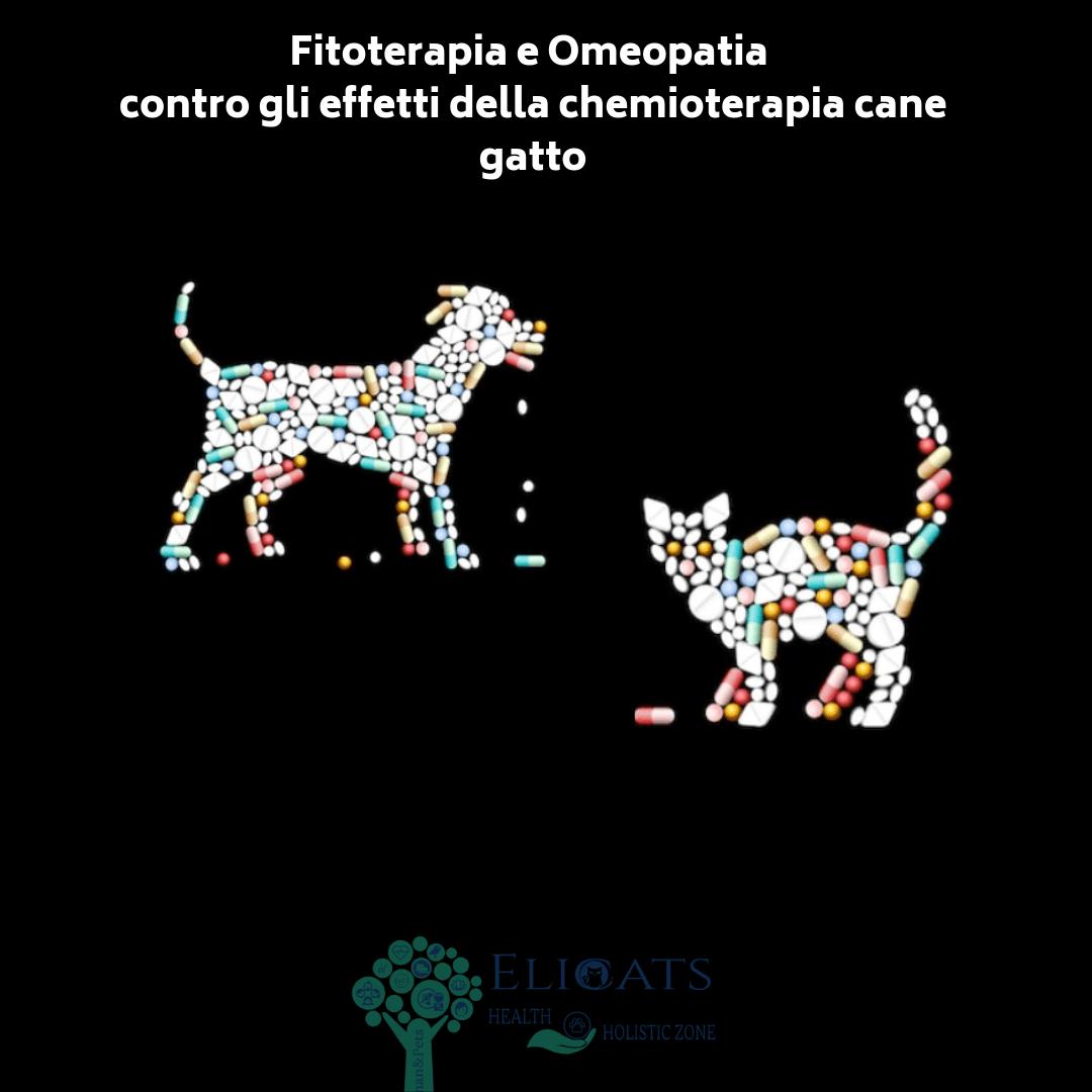 effetti collaterali chemioterapia cane gatto