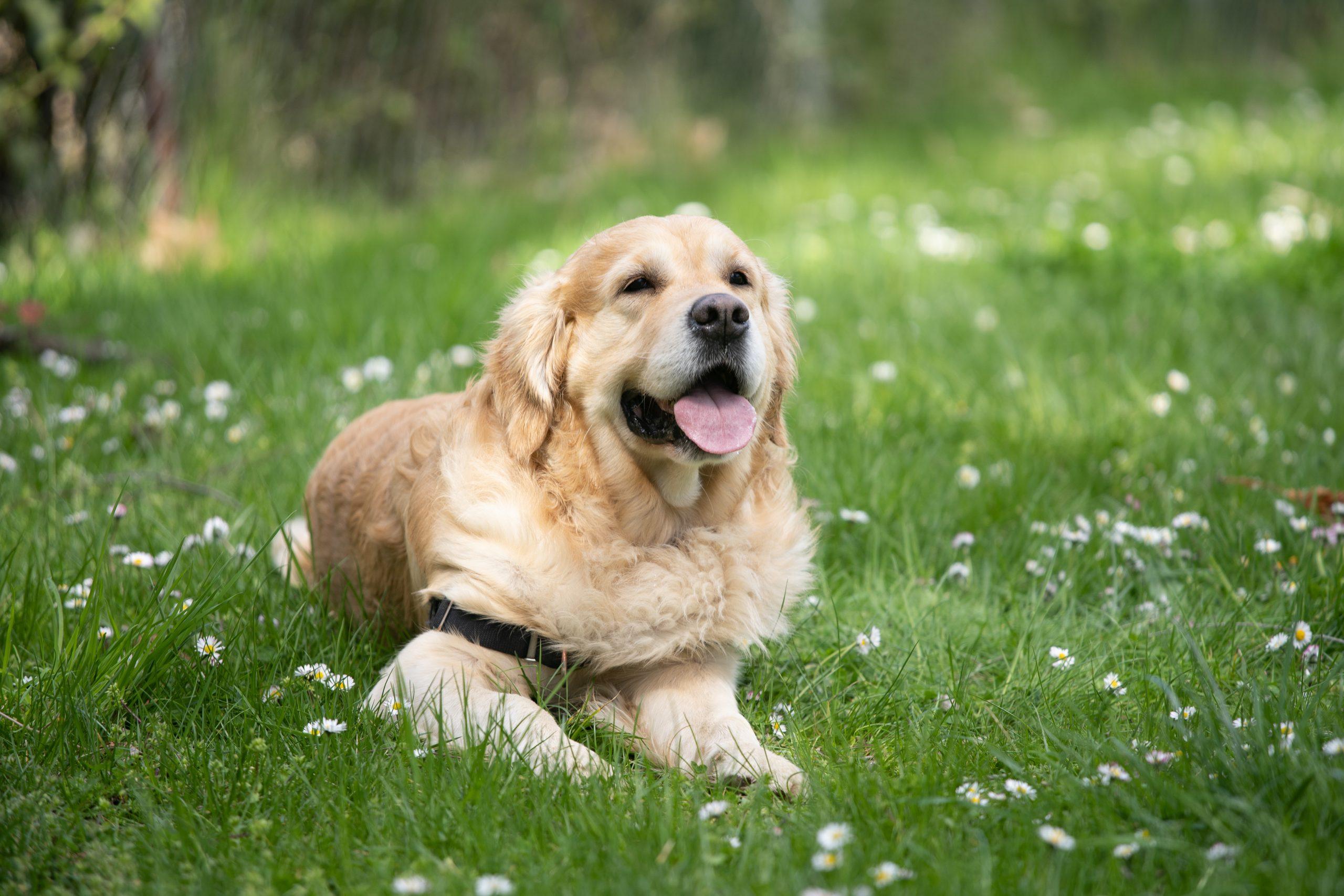 integratori problemi fegato cane