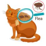 Fipronil dosaggio gatto