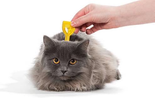 Fipronil gatto effetti collaterali