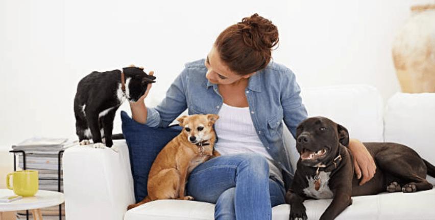 ribesphyto cane gatto dermatite