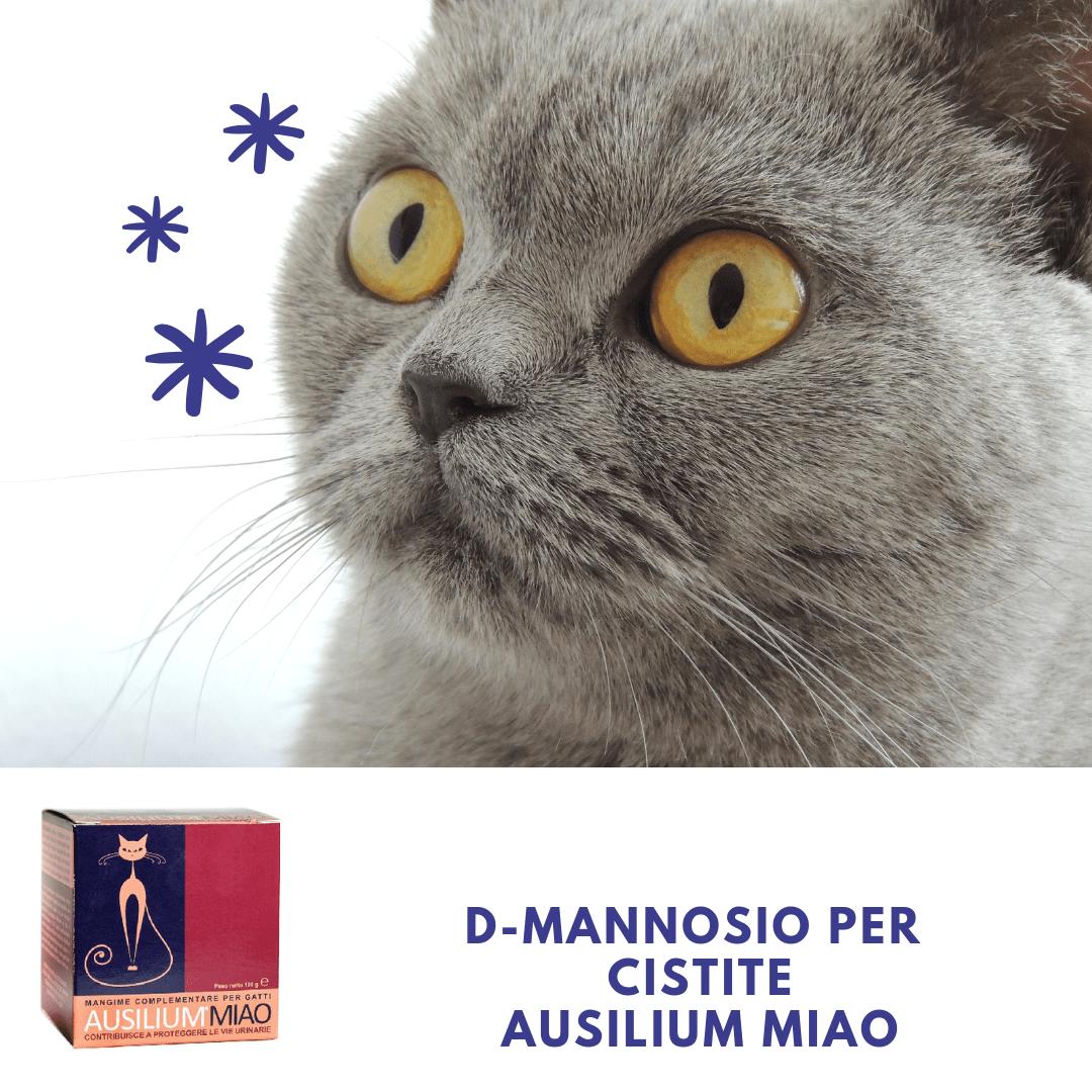 D-mannosio gatto cistite