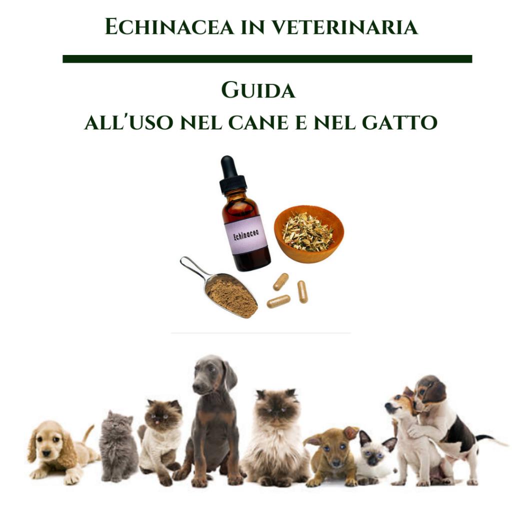 Echinacea in veterinaria