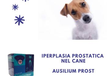 Iperplasia prostatica nel cane
