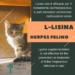 Lisina herpes gatto