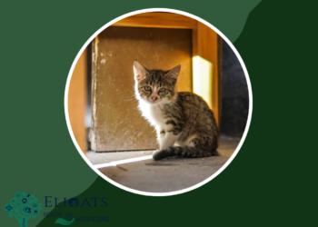 rinotracheite gatto rimedi naturali