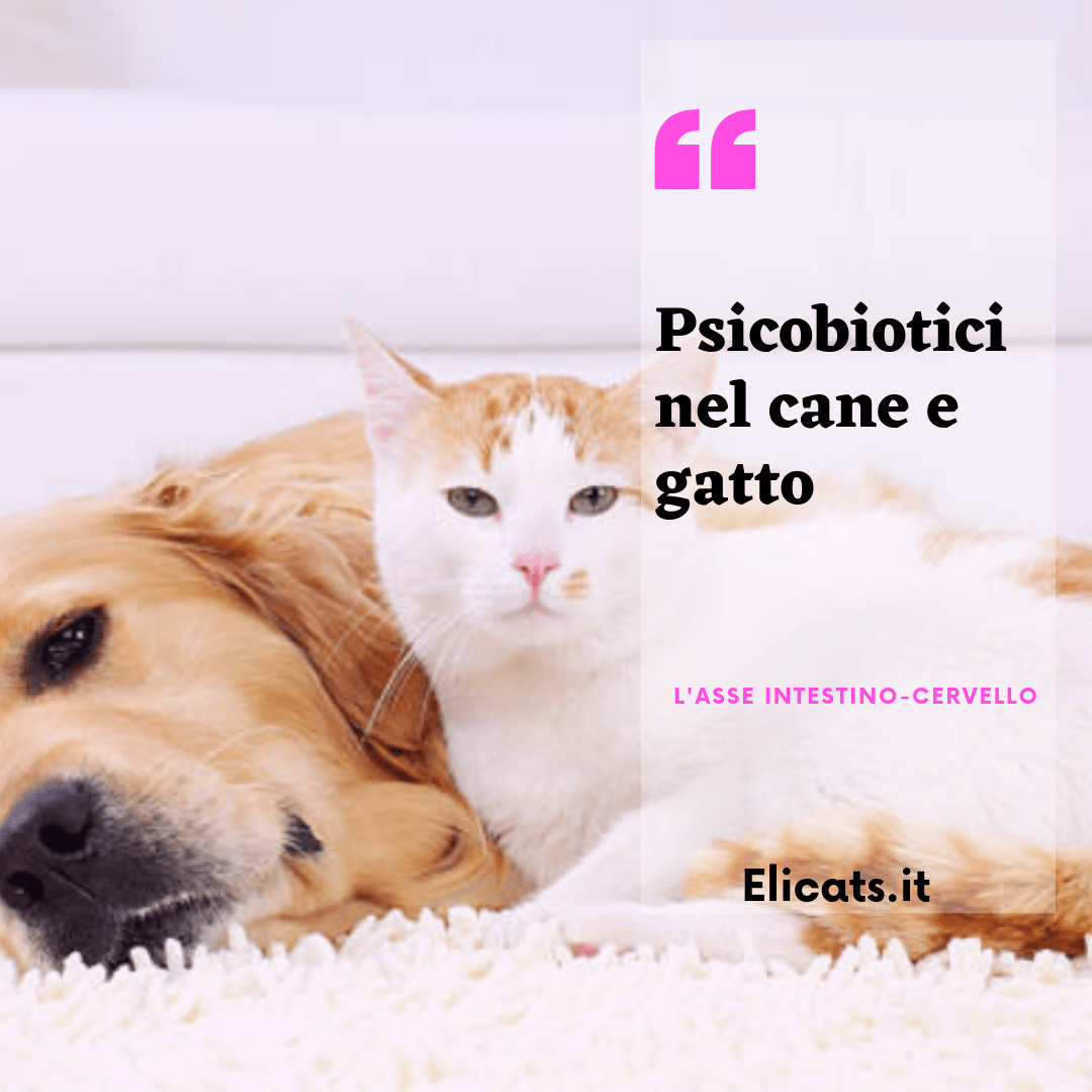 psicobiotici cane gatto
