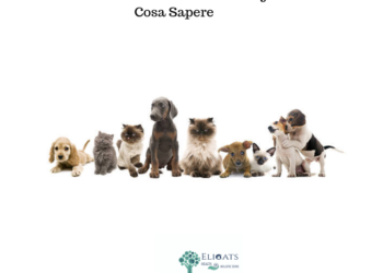 Anestesia in veterinaria