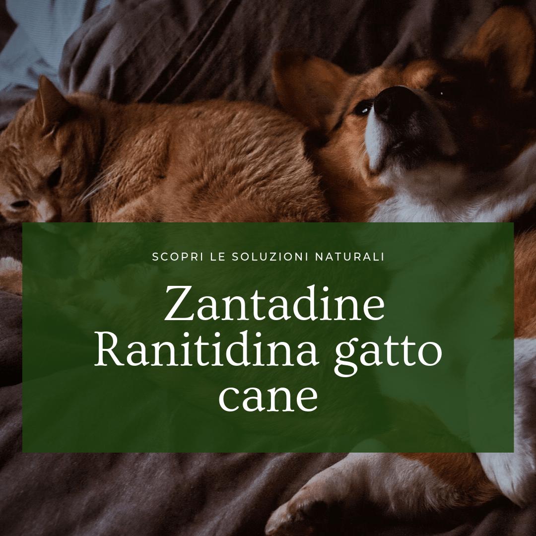 Zantadine Ranitidina gatto cane